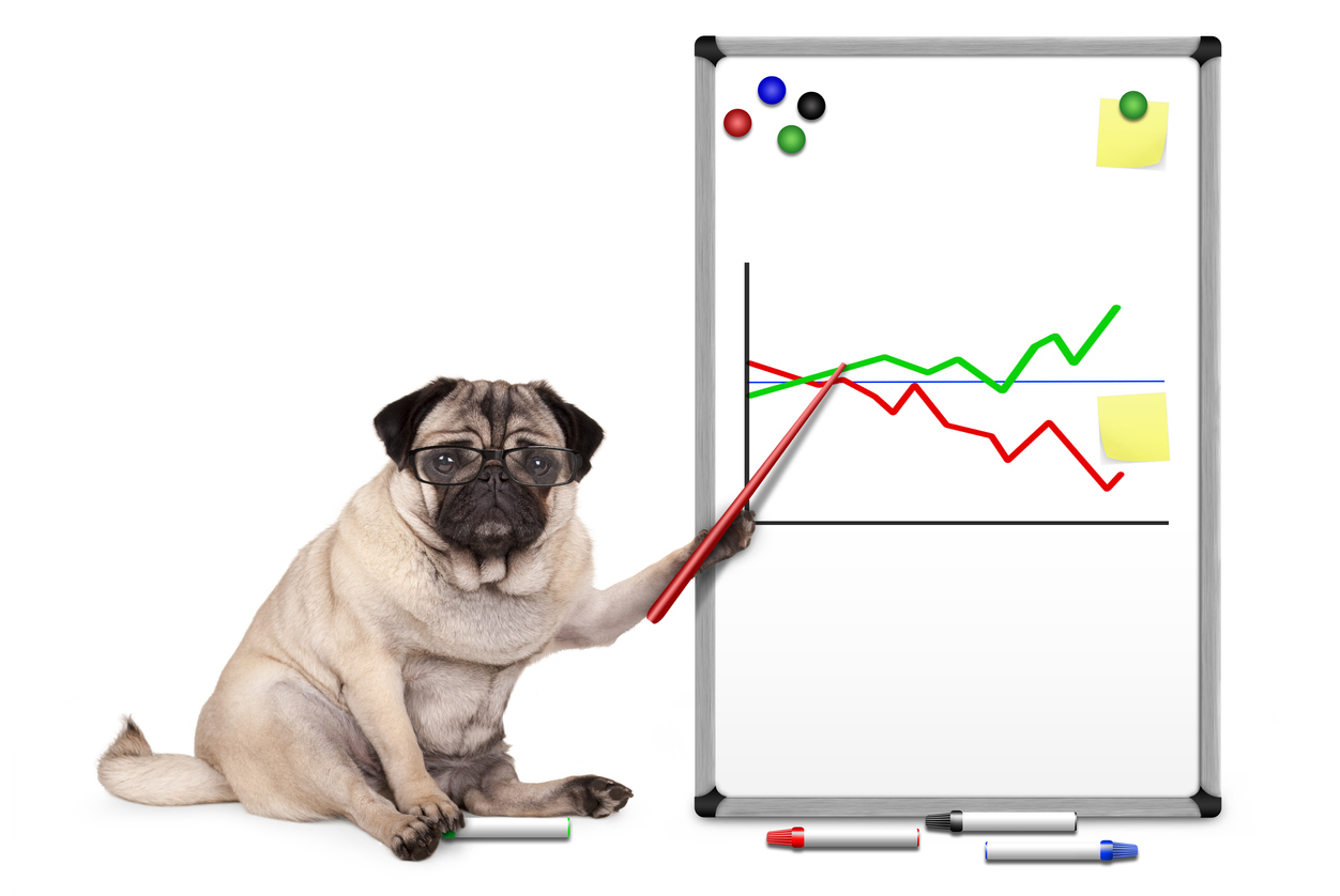 Pug dog wearing glasses pointing to graphs on whiteboard
